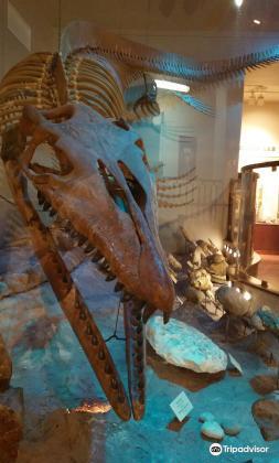 Texas Memorial Museum4