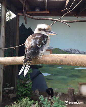 羅薩蒙德吉福德動物園3