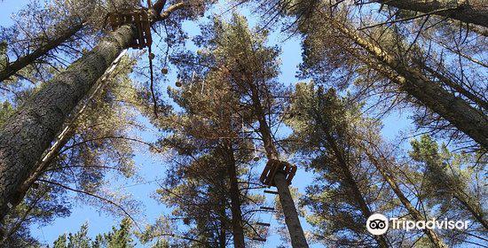 Adrenalin Forest4
