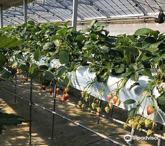 Yatsu no Sato Strawberry Farm