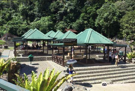 Kinabalu Park•2011