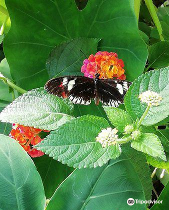 Buckfast Butterfly Farm and Dartmoor Otter Sanctuary2