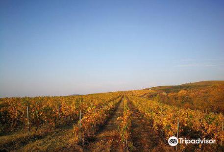 Balla Geza Winery