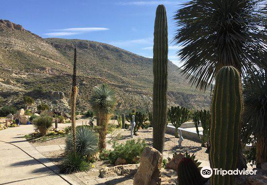 Cactus Nijar1