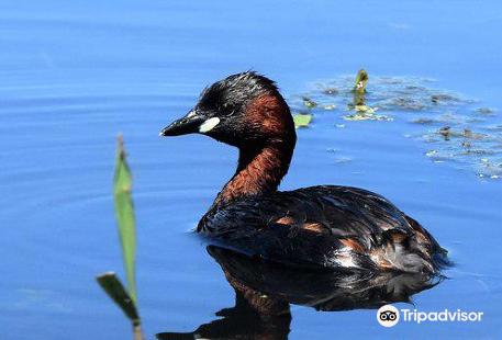 Reserve Ornithologique de Grand-Laviers