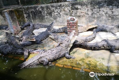 Miri Crocodile Farm