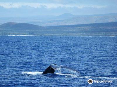 Captain Dan McSweeney's Whale Watching Adventures