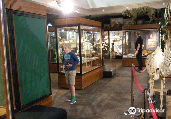 University of Aberdeen Zoology Museum2