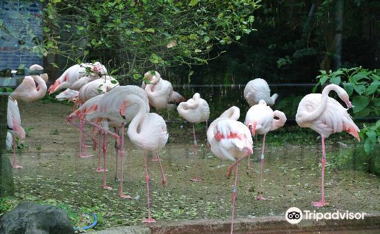 Omoriyama Zoo1