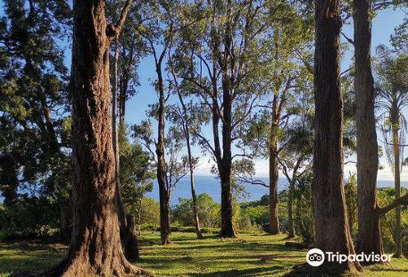 Waikamoi Ridge Trail