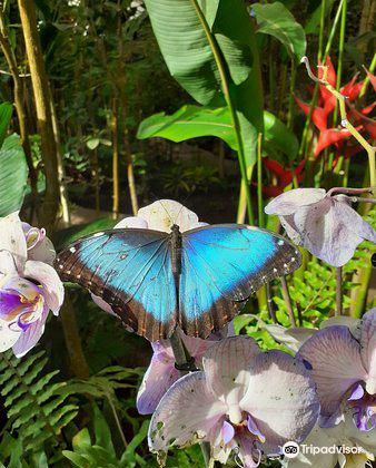 Butterfly Park of Benalmadena2