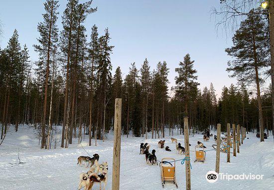 Lapland Safaris Luosto