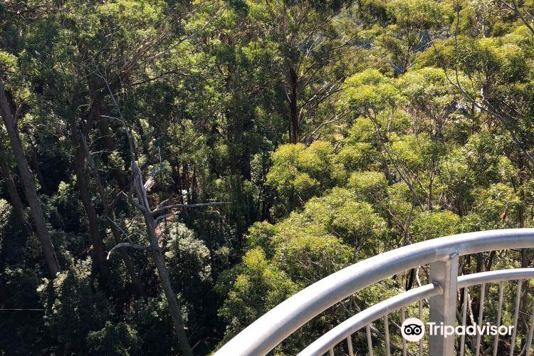Illawarra Fly Treetop Walk4
