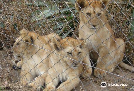 El Paraiso Zoo (Zoologico El Paraiso)