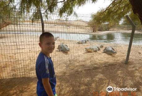Crocoloco Crocodile Farm
