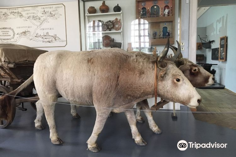 Poltava Regional Museum4