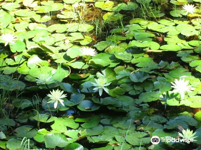 Springs of the Ipiranga State Park2