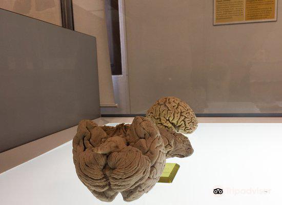 Human Body Museum2