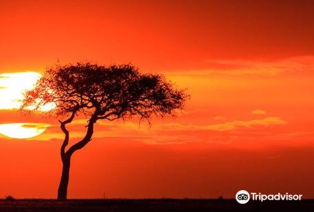 Kenya Walking Survivors Safaries