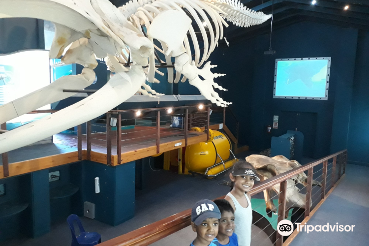 The Whale House Museum1