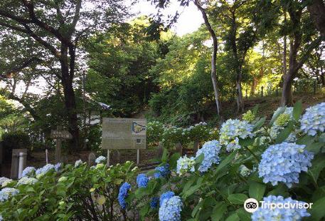 舞鶴公園 牡丹芍薬園