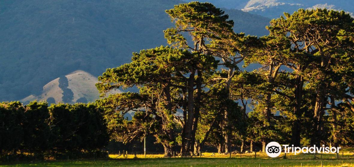 South Wairarapa District