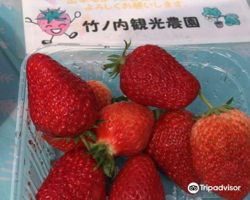 竹ノ内観光農園2