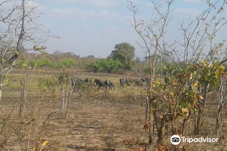 Liwonde National Park1