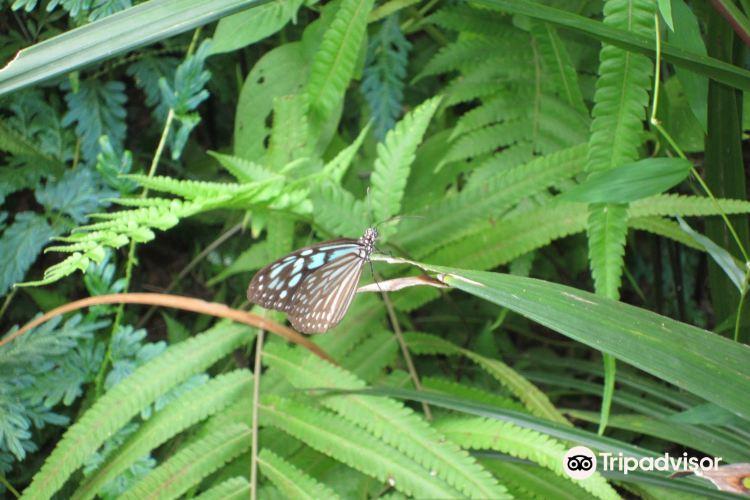 蝴蝶園與昆蟲王國4