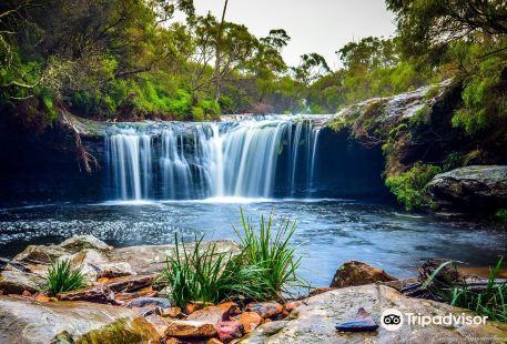 Minnamurra Rainforest Centre - Budderoo National Park