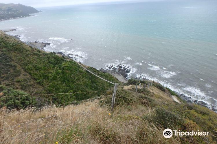Paekakariki Escarpment Walkway4
