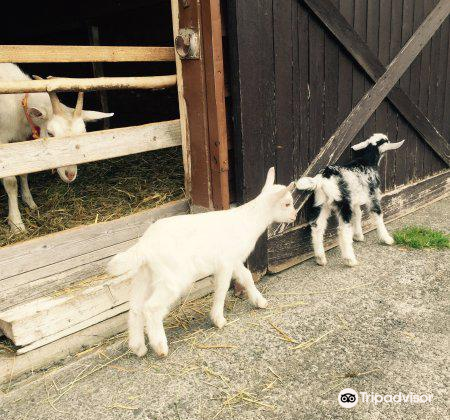 Tonden Farm Akaigawa Ranch3