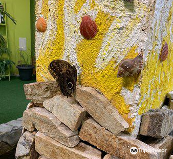 Butterfly House Varna