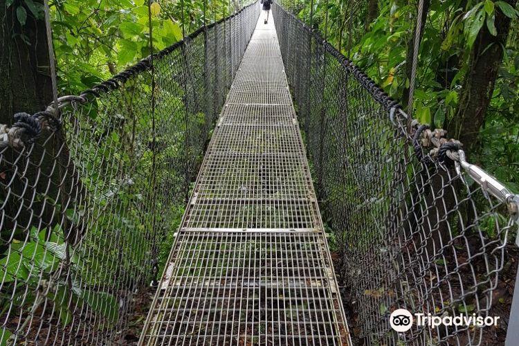 Mistico Arenal Hanging Bridges Park4