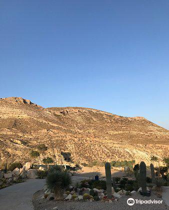 Cactus Nijar3