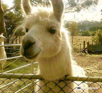 Llama Farma