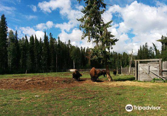 Rocky Mountain Buffalo Ranch & Guest Cottage Buffalo Tours4