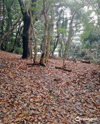 Minami Park1