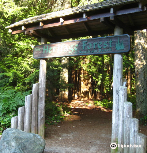 Heritage Forest2