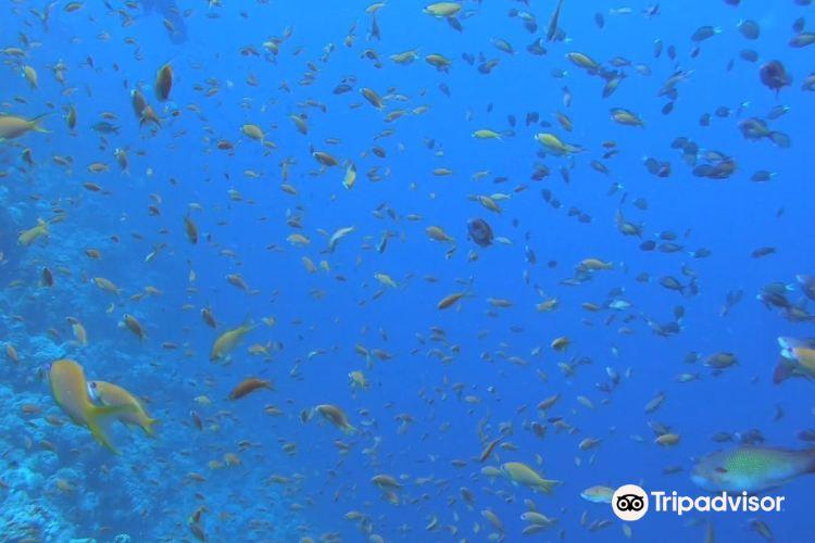 傑克遜礁2