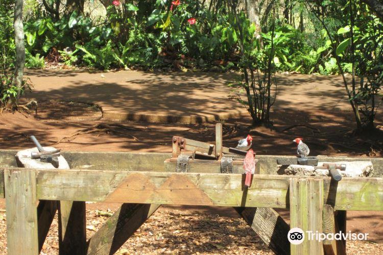 purdy's macadamia nut farm
