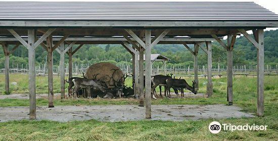 Reindeer Ranch1