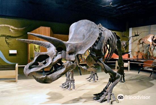克利夫蘭自然歷史博物館1