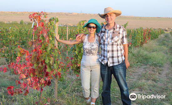 Van Ardi Winery4
