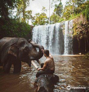 Airavata Khmer Elephant Foundation