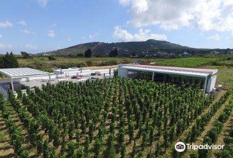 Azienda Agricola Tenuta di Castellaro