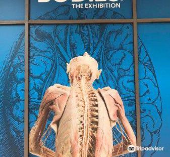 Bodies The Exhibition (Atlanta)