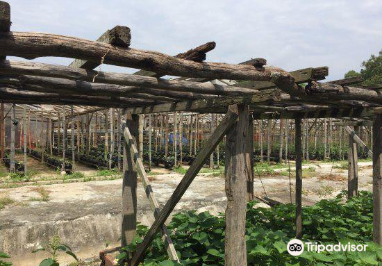 Oh Chin Huat Hydroponic Farms4