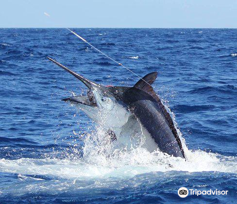 Hawaii Marlin Fishing1