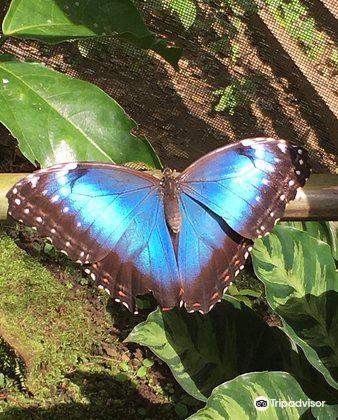 Spirogyra Butterfly Garden2